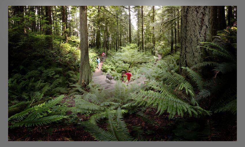 sunlit_trail.jpg